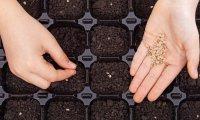 Подготовка семян к посеву и основные правила высева