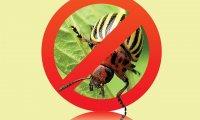 Инсектицид: что это?